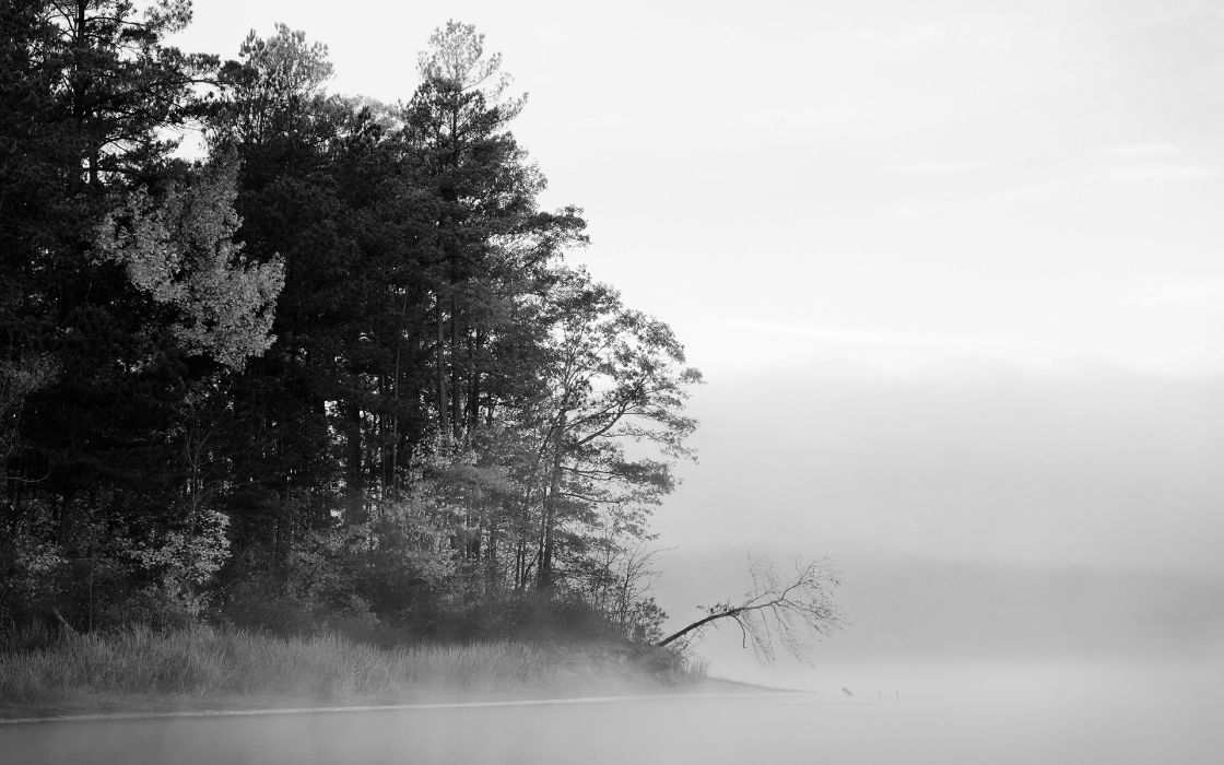 trees fog grayscale wallpaper