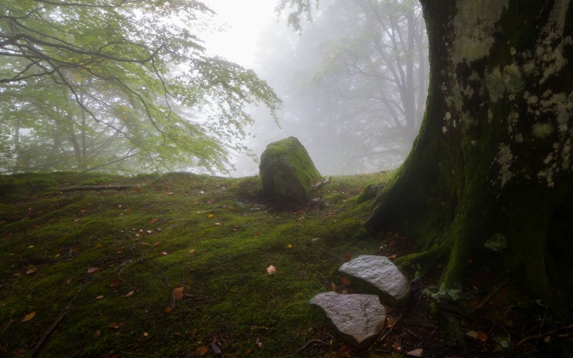 trees forests stones moss wallpaper