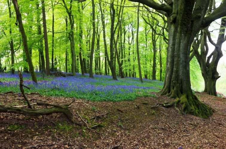 forest trees flowers nature wallpaper
