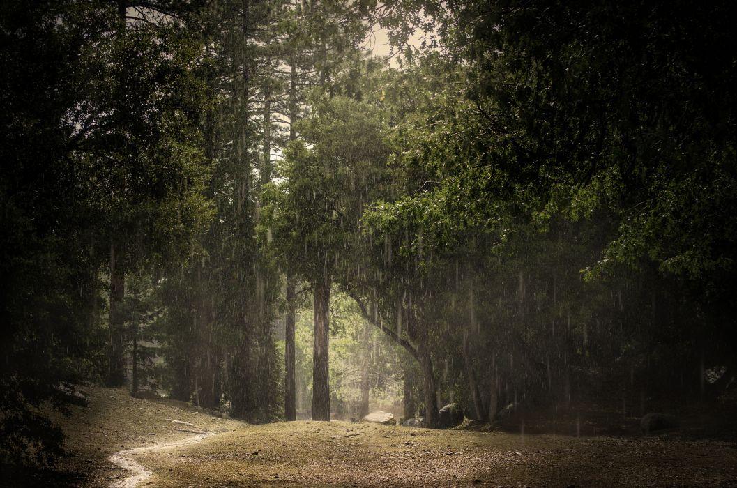 rain summer forest wallpaper