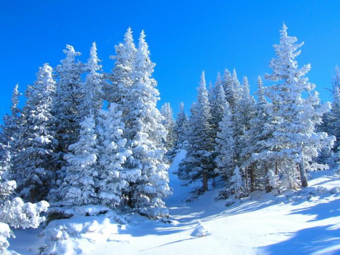 winter forest trees landscape wallpaper
