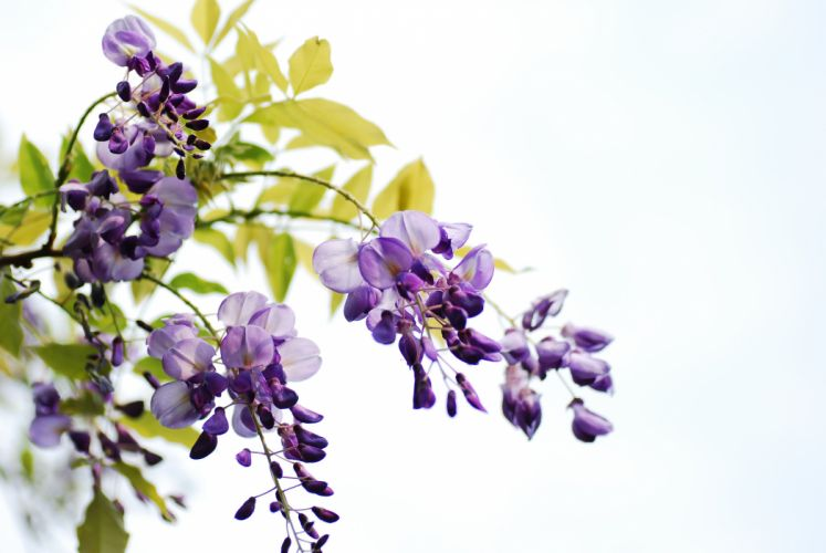 branches flowers leaves bunches wallpaper