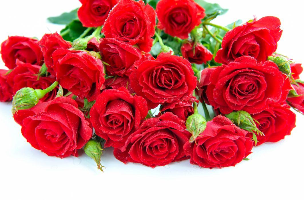 red roses bouquet petals flowers wallpaper