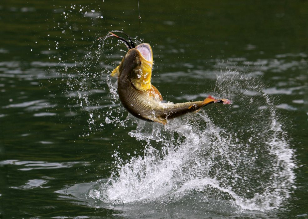 bass fish fishing drops            g wallpaper