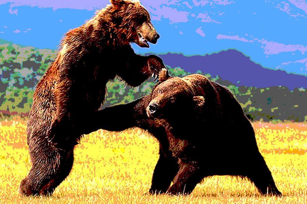 bear battle predator     yu wallpaper
