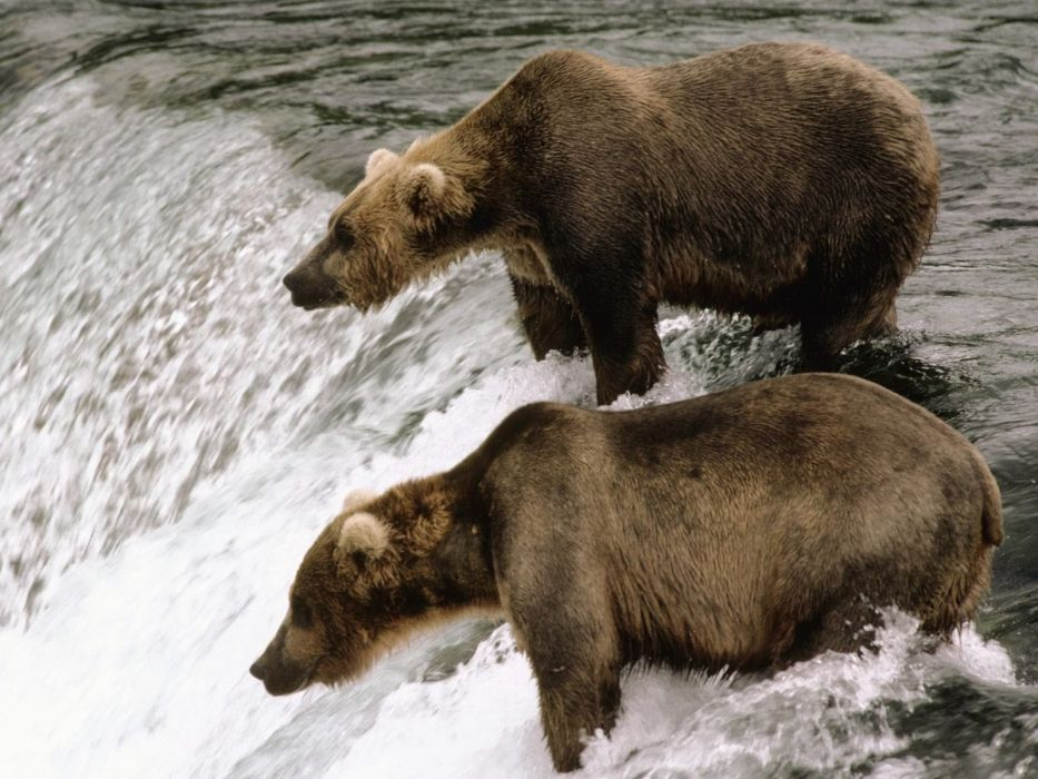 bear river     h wallpaper