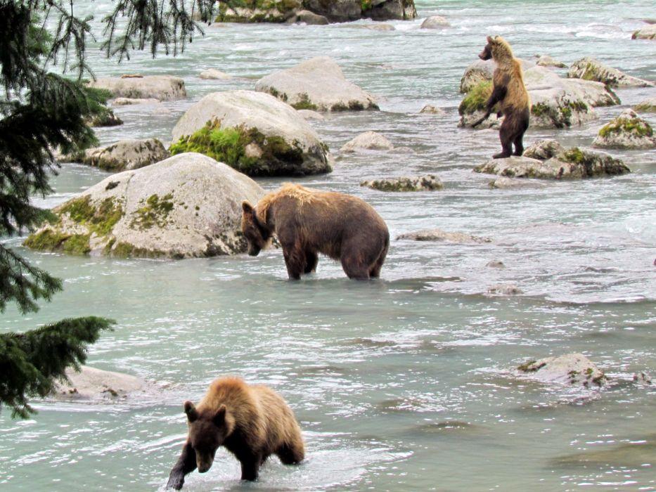bear river    i wallpaper