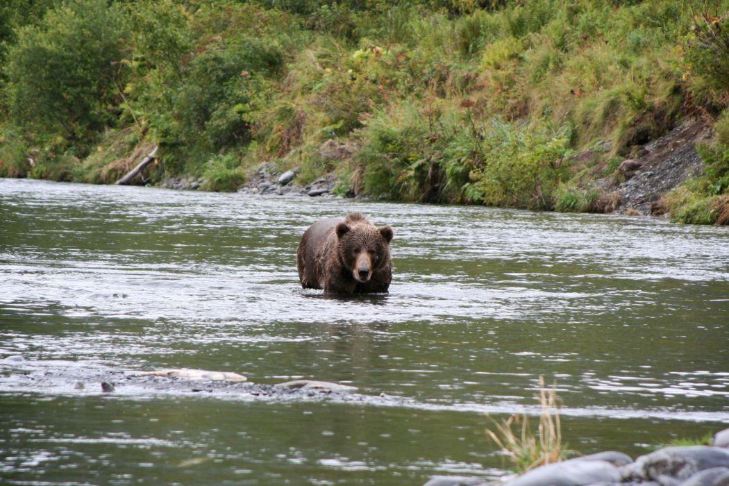 bear river    u wallpaper