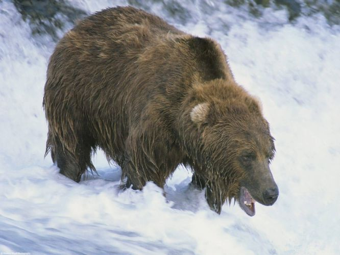 bear river f wallpaper