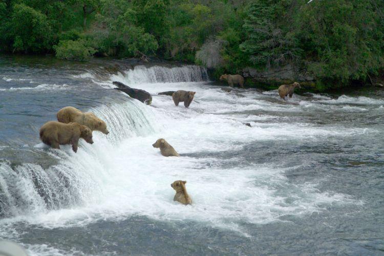 bear river fa wallpaper