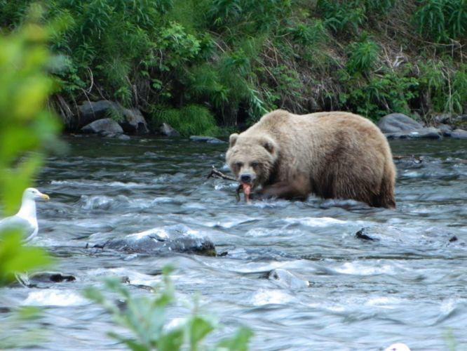 bear river y3_JPG wallpaper