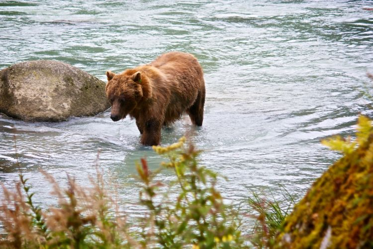 bear river e wallpaper