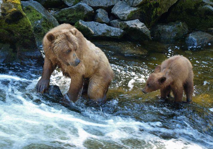 bear river baby cub e wallpaper