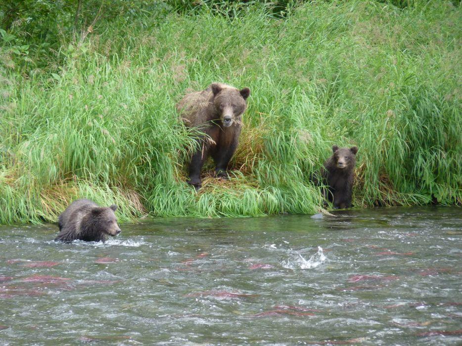 bear river baby cub       f wallpaper