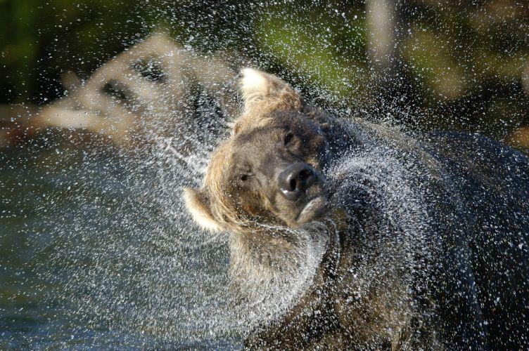 bear river drops j wallpaper