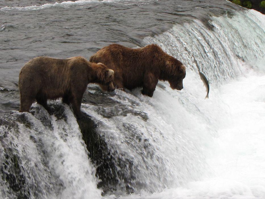 bear river salmon fish    k_JPG wallpaper