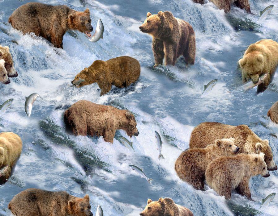 bear river salmon fish   it wallpaper