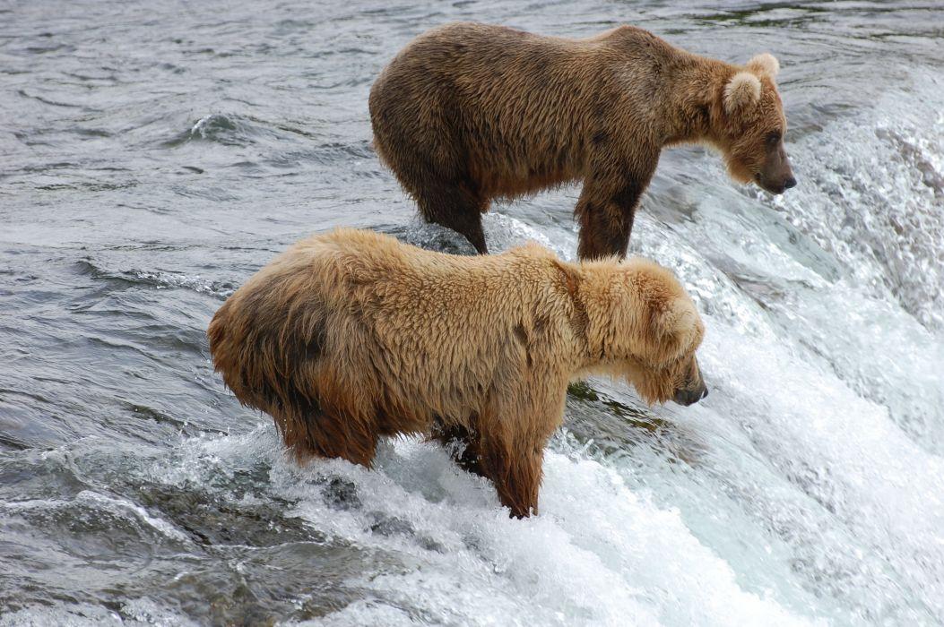 bear river y wallpaper