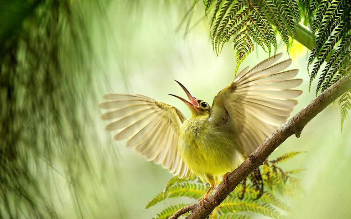 bird wings wingspan beak branch wallpaper