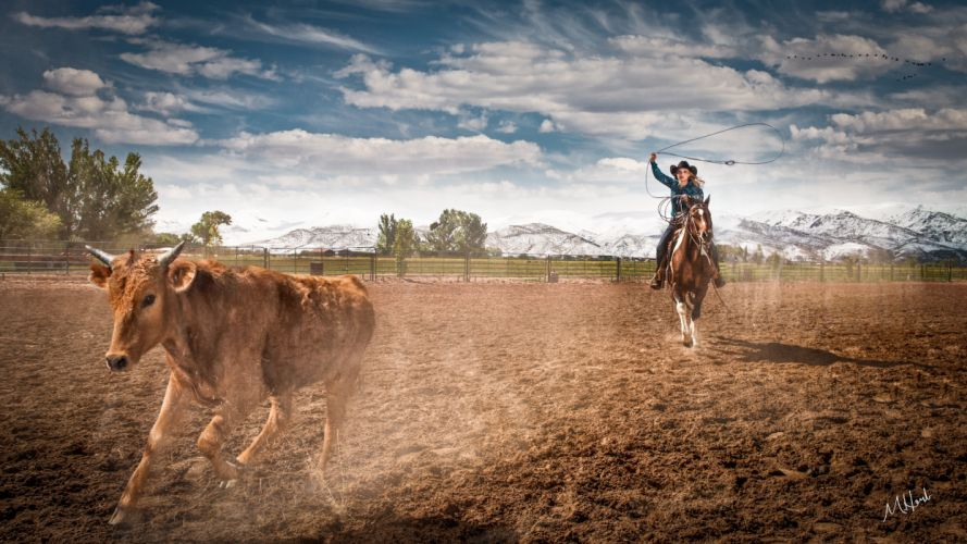 Bulls Cowboy Animals cow bull girl wallpaper