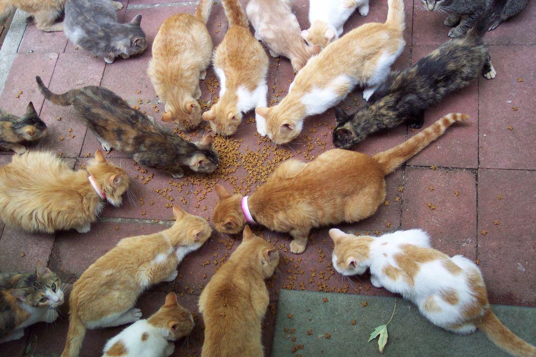 cat feline cats        f wallpaper