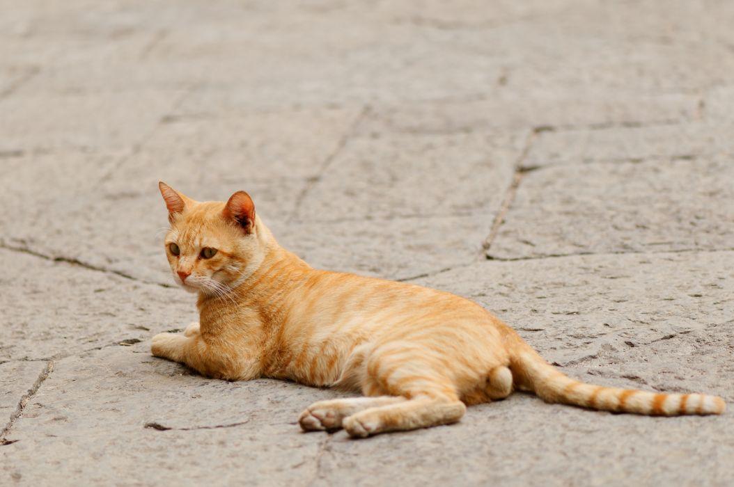 cat feline cats  t wallpaper