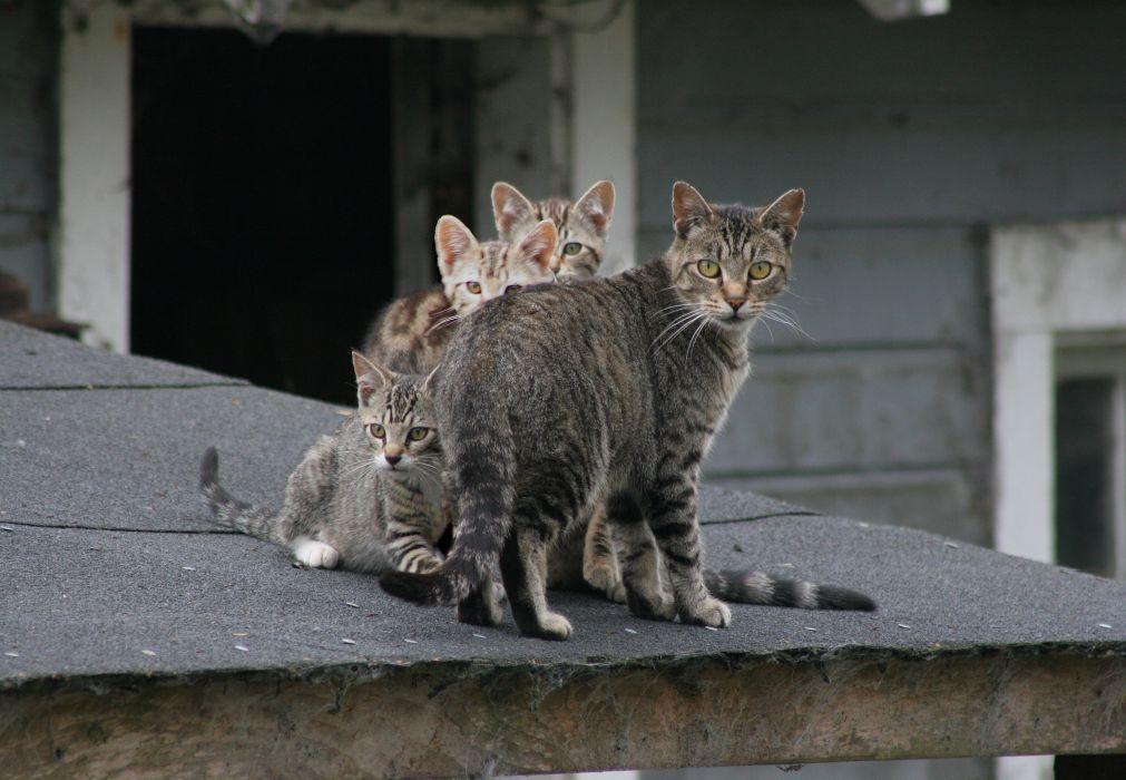 cat feline cats kitten baby wallpaper