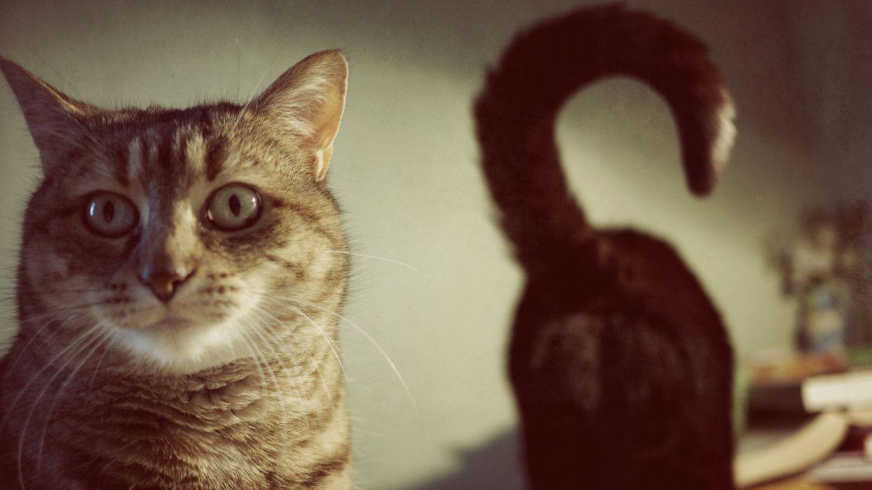 Cats   g wallpaper