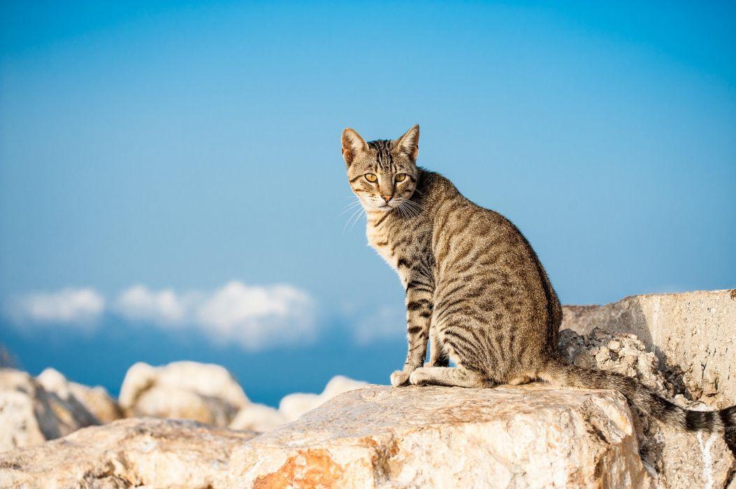 Cats Animals   g wallpaper