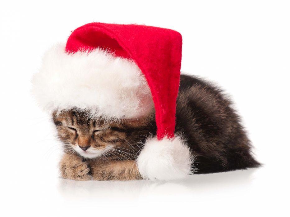 Cats Christmas ( New year ) Winter hat Animals kitten wallpaper