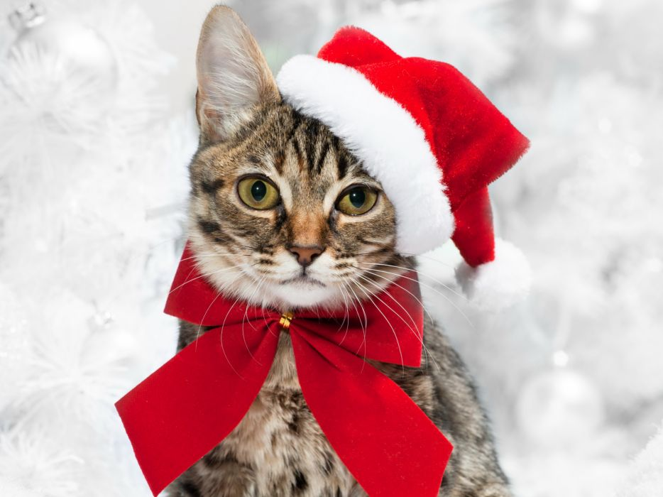 Cats Christmas ( New year ) Glance Bowknot Animals wallpaper