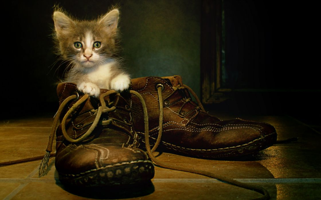 Cats Kittens Boots Animals wallpaper