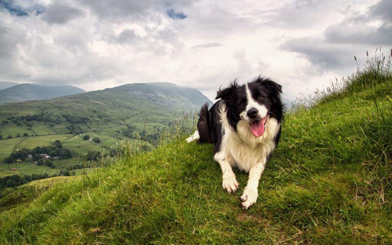 Dogs Grass Animals wallpaper