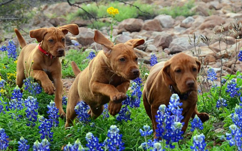 dogs puppies running flowers baby puppy wallpaper