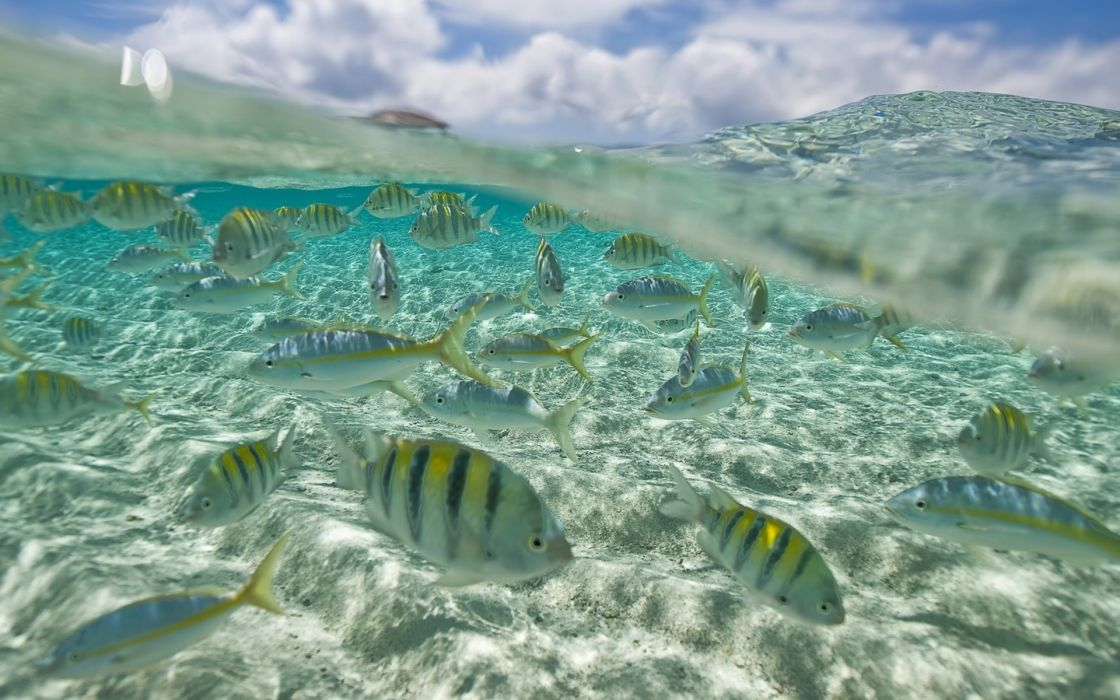 fish pack underwater sea ocean wallpaper