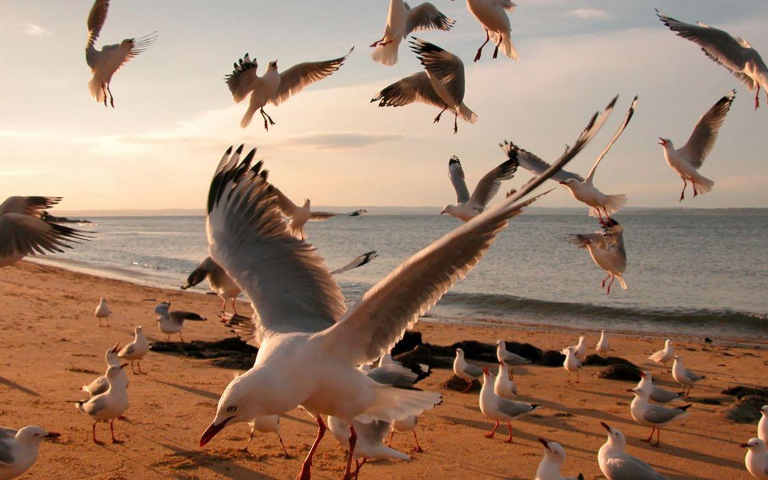 gulls flock shore sea bokeh wallpaper