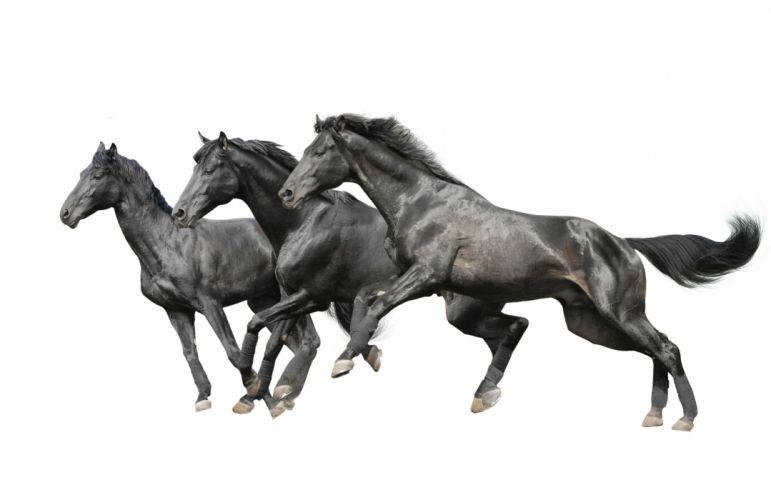 Horse r wallpaper