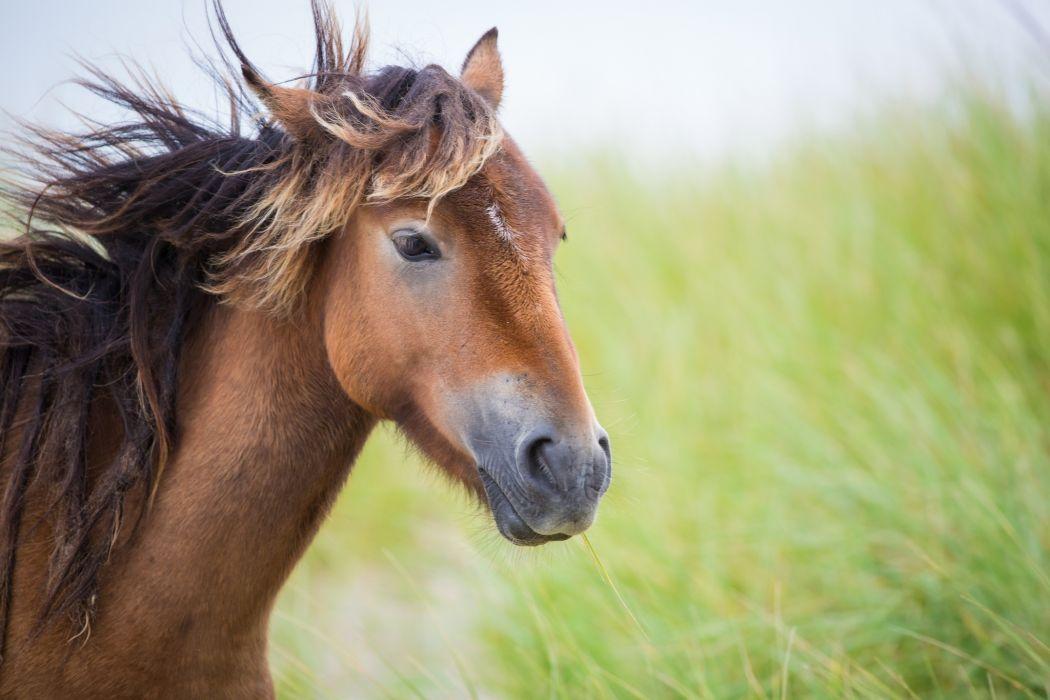 horse head muzzle mane wind wallpaper