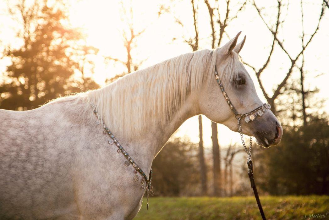 horse black mane profile sun light wallpaper