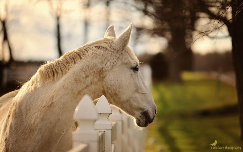 horse head face profile fence autumn wallpaper