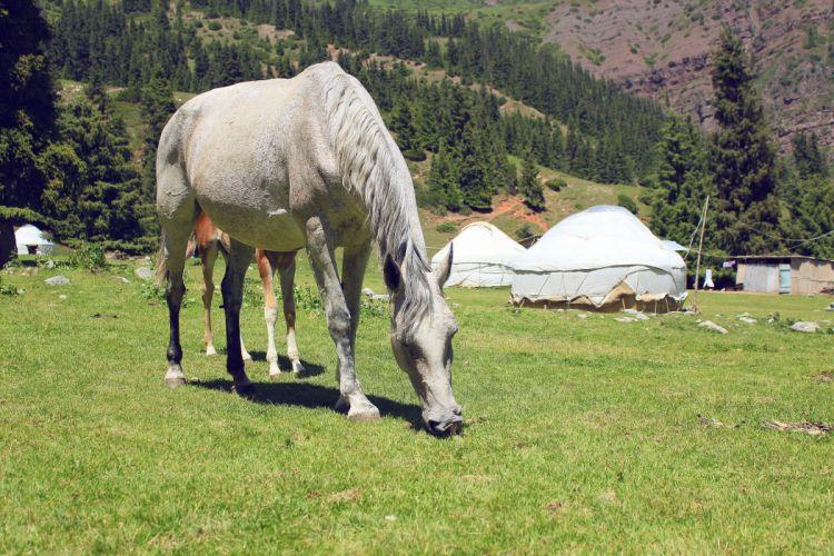 Horses Grass Animals horse g wallpaper