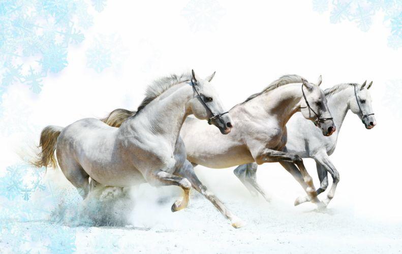 Horses Horse wallpaper