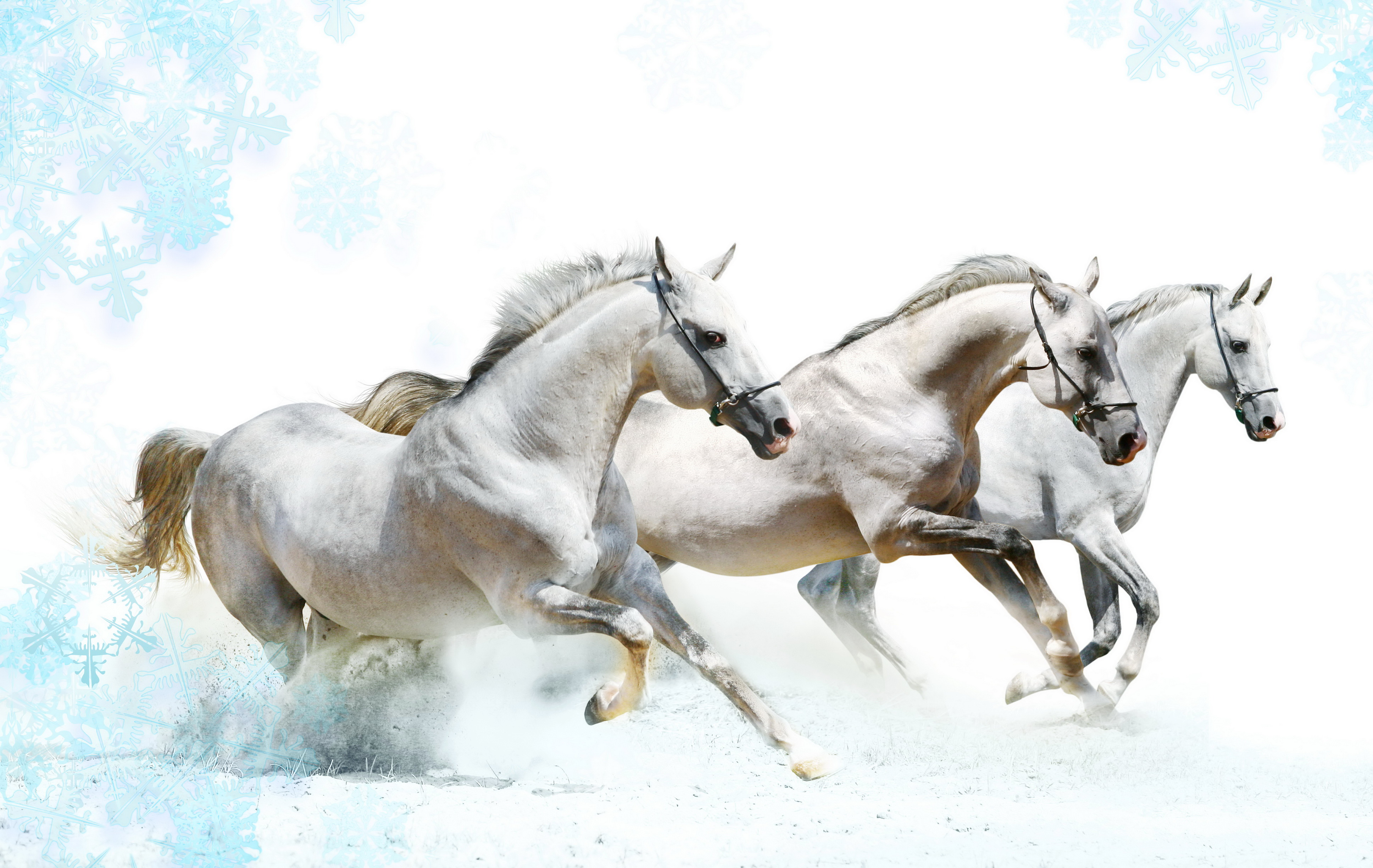 Horse Scenery Wallpaper Wallpaperhali Com