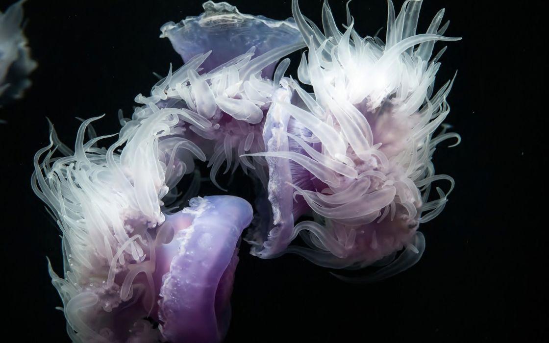 jellyfish underwater black wallpaper