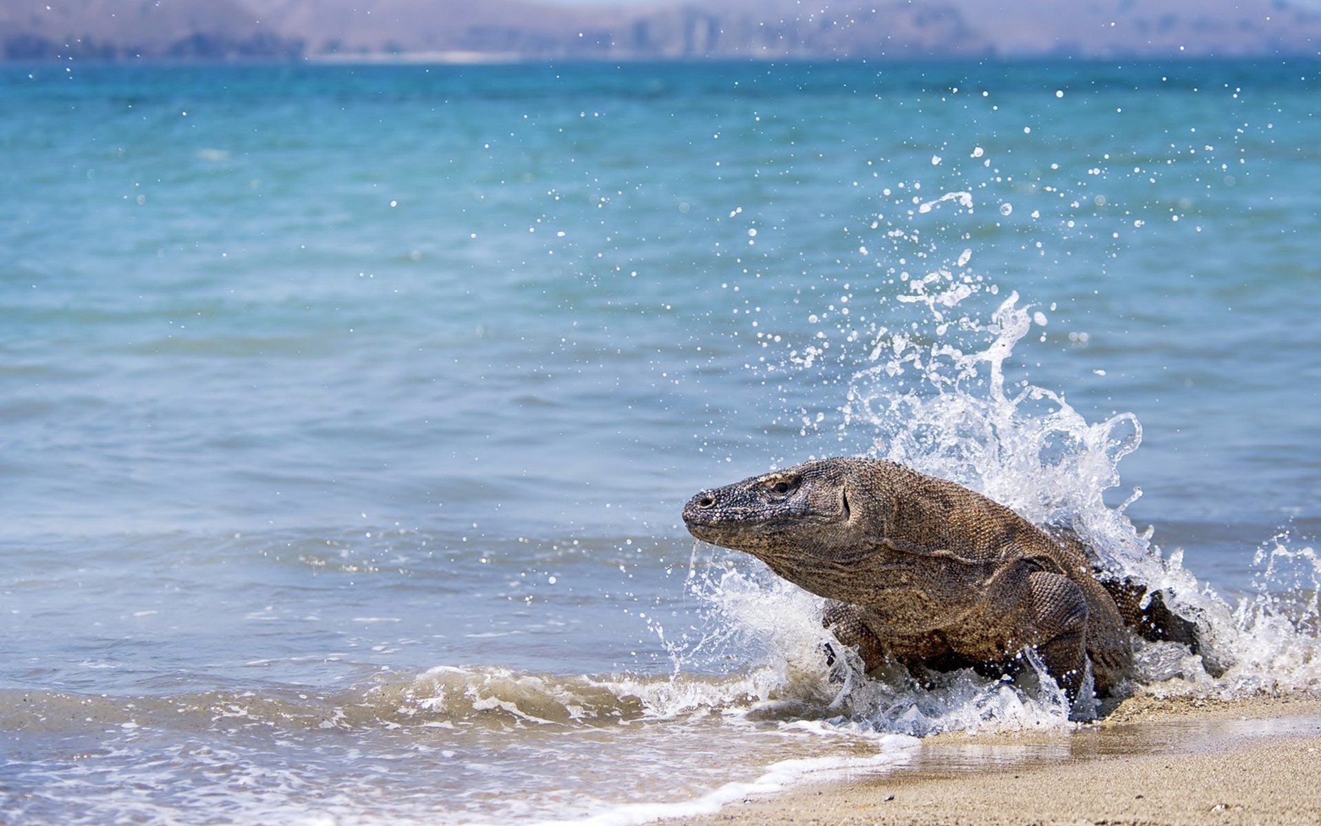 Lizard beach sand water monitor ocran sea wallpaper | 1920x1200