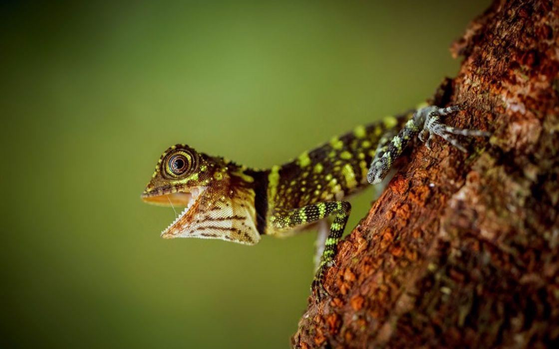 lizard mouth eyes wallpaper