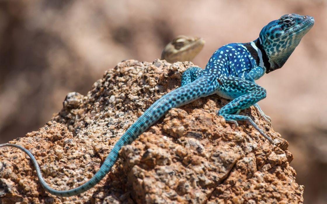 lizard stone color wallpaper