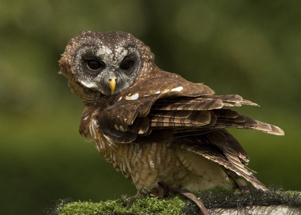 moss bird owl wallpaper