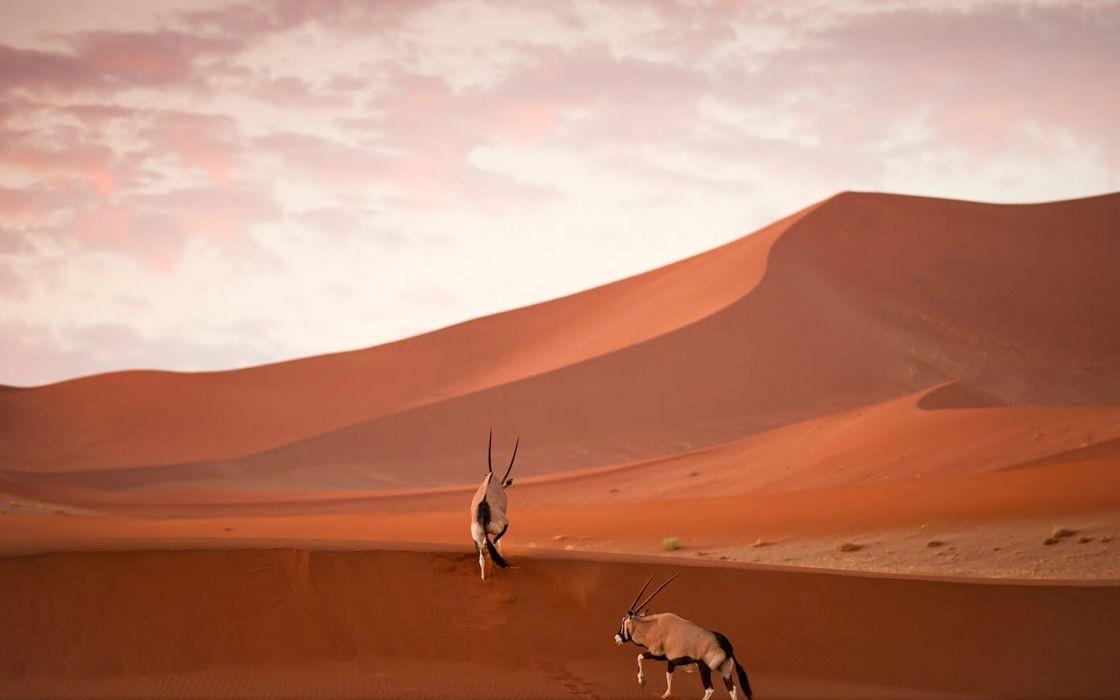 oryx desert sand wallpaper