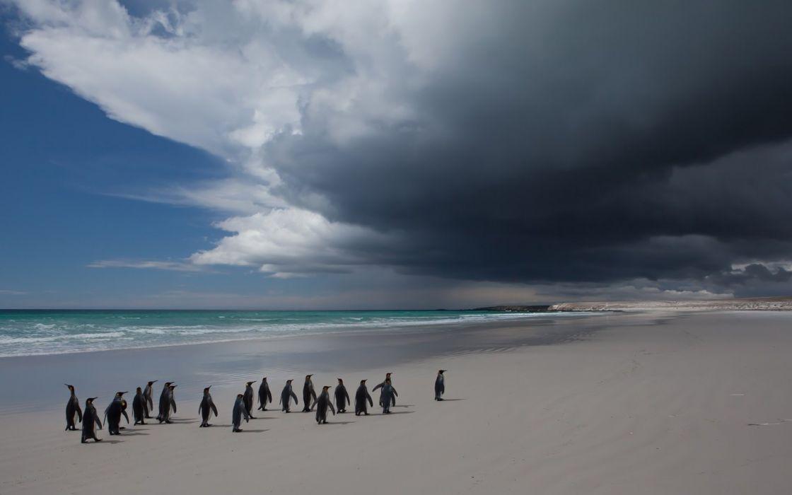 penguins flock ocean beach cloud wallpaper